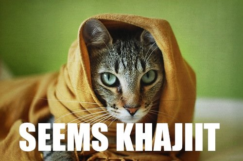 seems khajiit